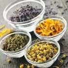 Полезные и действенные травы в лечении гастрита