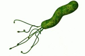 Бактерия хеликобактер пилори