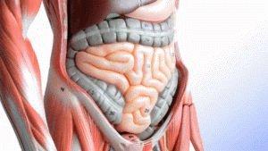 Человеческий кишечник