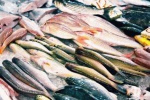 Ассортимент рыбы