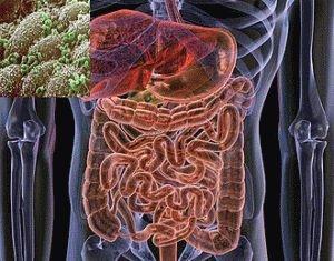 Здоровая микрофлора человека