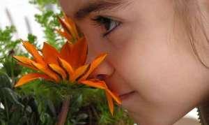 Отравление ребёнка ядовитым растением