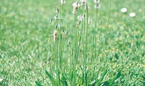 Травы для очистки печени