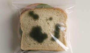 Отравление плесенью на хлебе и стенах
