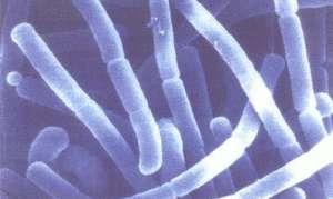Линекс при дисбактериозе