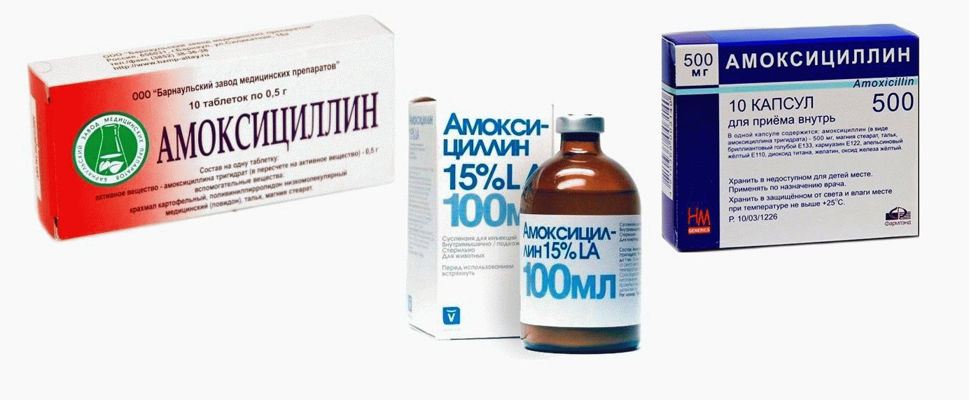 amoxicillin Amoxicillin is used to treat bacterial infections in many different parts of the body it is also used with other medicines (eg, clarithromycin, lansoprazole) to treat h pylori infection and duodenal ulcers amoxicillin belongs to the group of medicines known as penicillin antibiotics it works by killing the bacteria and preventing their growth.