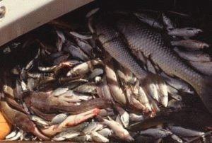 Разновидности рыбы