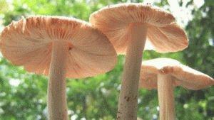 Полезные грибы