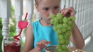 Веточка винограда