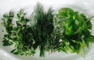 Свежая зелень полезна