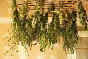 Травы сушёные