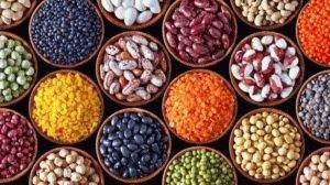 Разнообразие фасоли