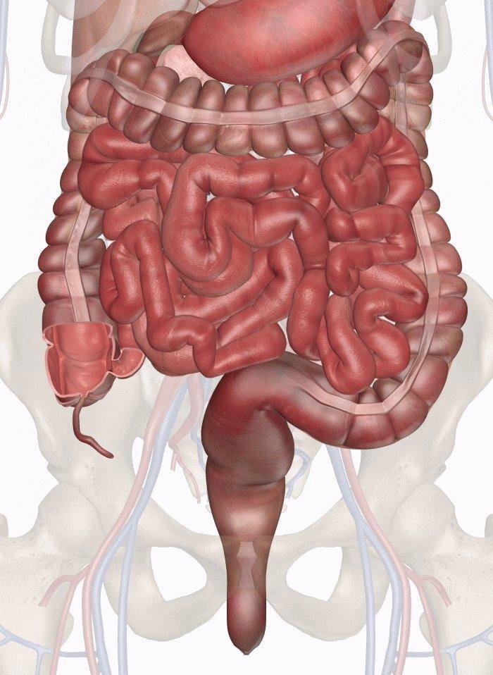 Метеоризм при панкреатите: что делать при вздутии живота и поджелудочной железы, лечение газов