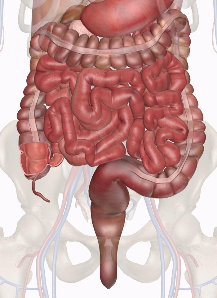 Дисбактериоз кишечника у взрослых – причины, симптомы, как лечить?