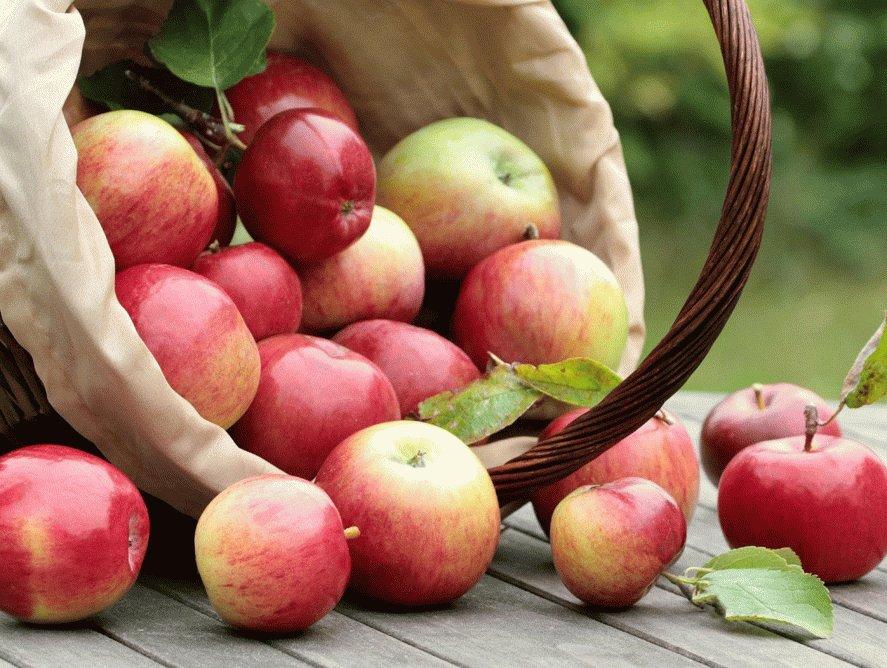 Яблоки при панкреатите поджелудочной железы