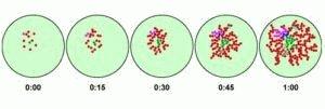 Размножение патогенной флоры