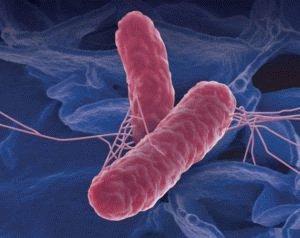 Микроб сальмонеллёза