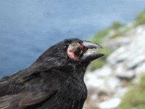 Паразитарная инвазия птиц