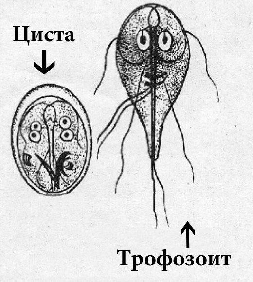 где живут паразиты в человеке