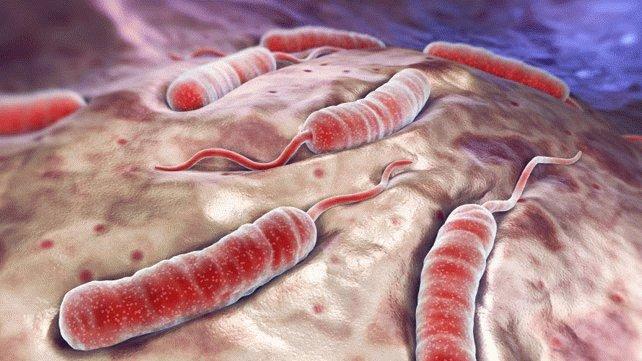 Холера – это что-то из прошлого или реальность настоящего