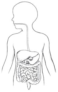 Желудочно-кишечный тракт ребёнка