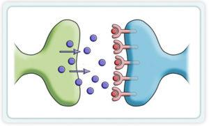 Блокатор дофаминовых рецепторов