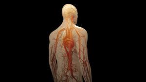 Центральная нервная система человека
