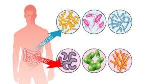 Дисбаланс микрофлоры кишечника