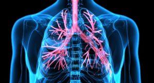 Кровь насыщается ядами в лёгких