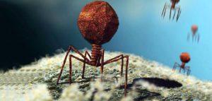 Вирусы атакуют клетку