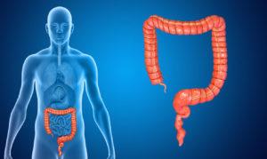Верхний отдел кишечника