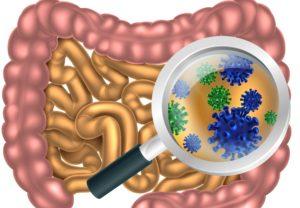 Бактерии и кокки