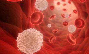 Лейкоциты в организме