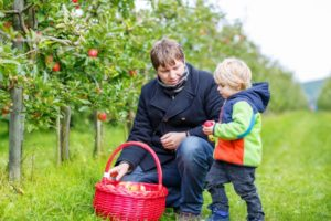 Яблоки полезны для очищения