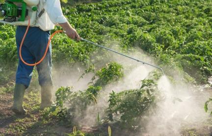 Человек опрыскивает урожай пестицидами