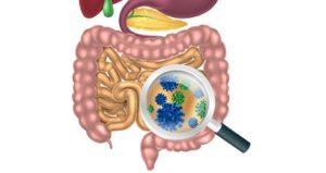 Полезные и вредные бактерии в кишечнике