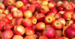 Яблоки чистят печень
