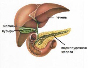 Желчный пузырь и поджелудочная железа