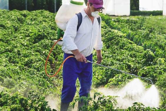 Человек опрыскивает огород пестицидами