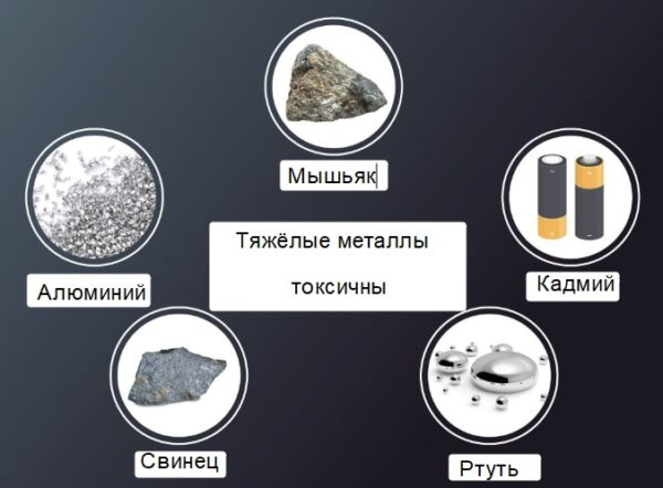 Тяжёлые металлы опасны