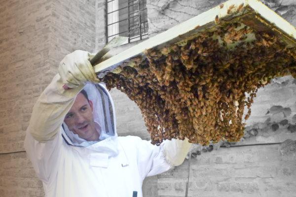 Мёд достают из улья