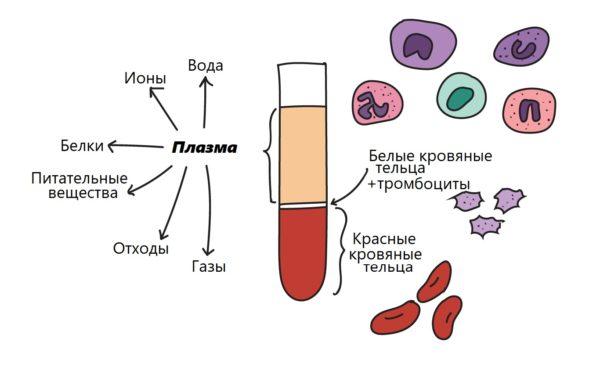 Состав крови человека