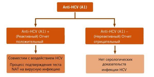 Антитела в крови к HCV